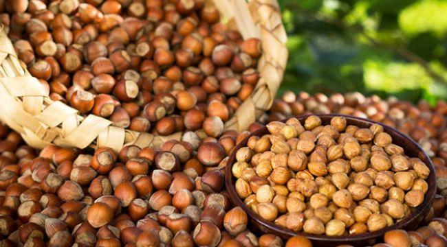 Fındık ve mamulleri ihracatı martta yüzde 53,3 arttı